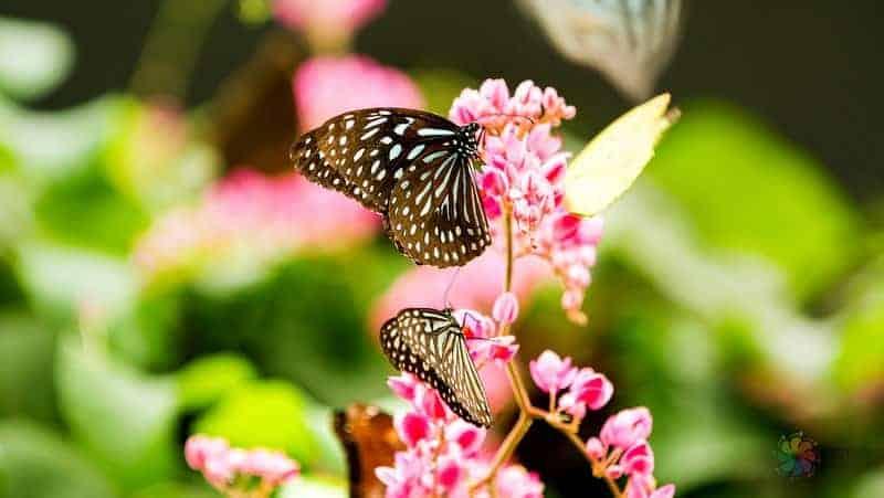 Butterfly Park kuala lumpur malezya