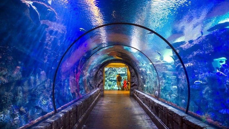 Las Vegas gezilecek yerler Shark Reef Aquarium at Mandalay Bay