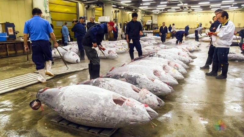 Tsukiji balık pazarı tokyo