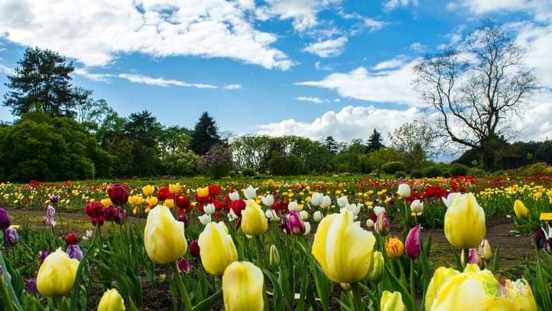 minsk gezilecek yerler Botanic Gardens