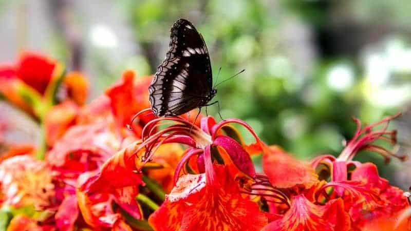 phuket gezilecek yerler Phuket Butterfly Garden and Insect World