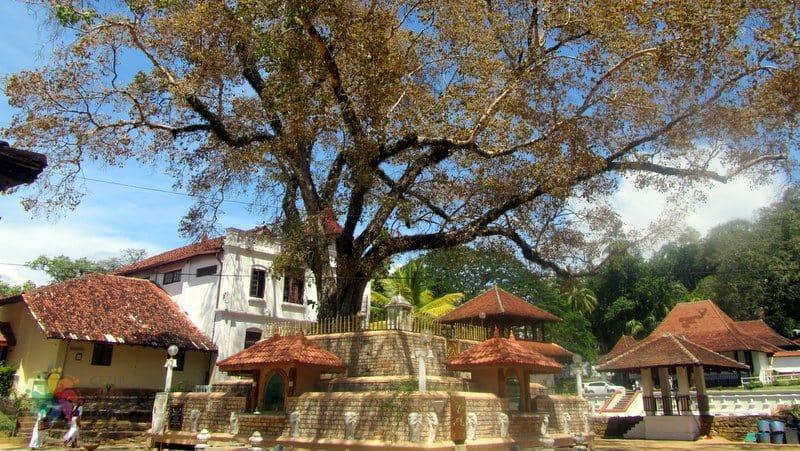 sri lanka'da görülecek yerler Kandy