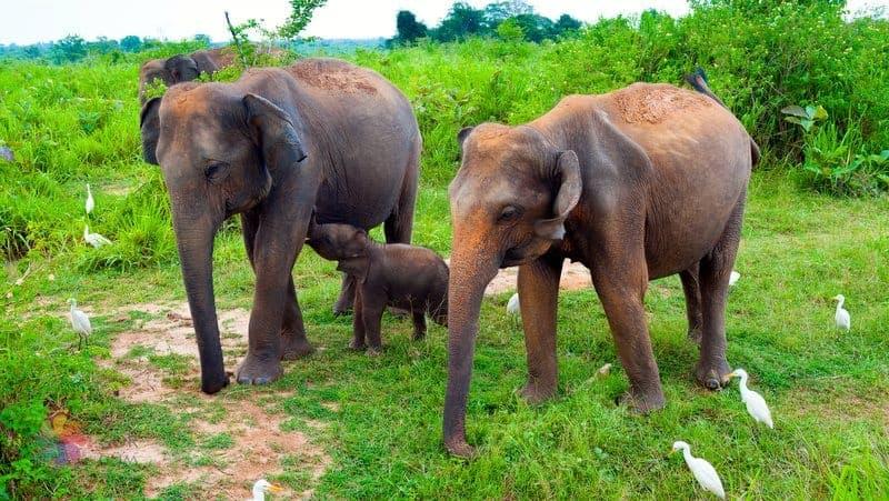 sri lanka gezilecek yerler Uda Walawe National Park