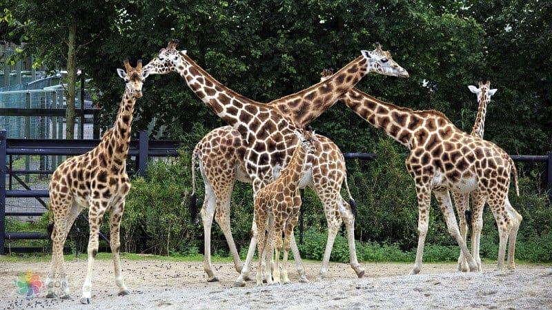Dublin Zoo Dublin gezilecek yerler