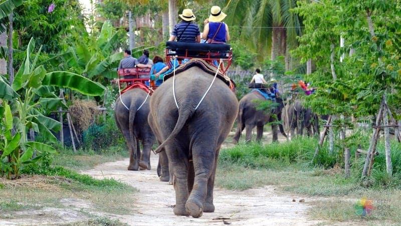 Elephant Village Pattaya gezilecek yerler