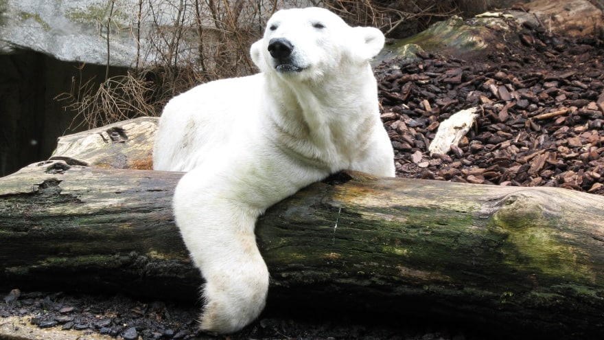 Münih'te ne yapılır? Munih Zoo