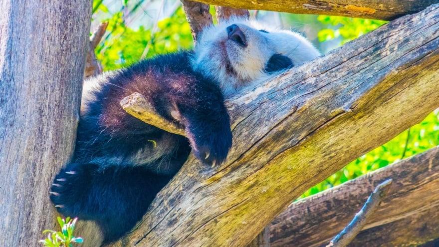 Viyana Hayvanat Bahçesi Viyana'da yapılacak şeyler