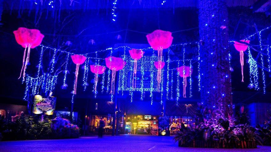 Singapur'da ne yapılır? gece safarisi